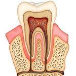 зуб и нервы