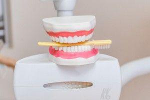 макет зубов с зубной щеткой