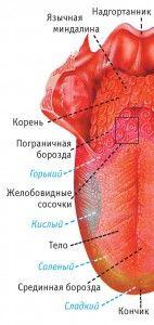 Щиплет кончик языка