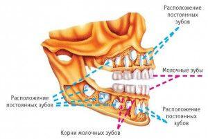 Молочный зуб не выпал, а коренной растет