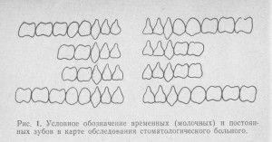 обозначение молочных и постоянных зубов