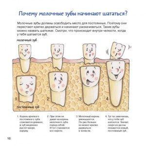 почему шатаются молочные зубы