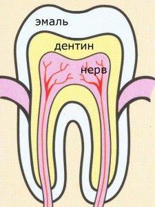 ткани зуба
