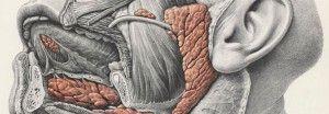 камню слюнных желез