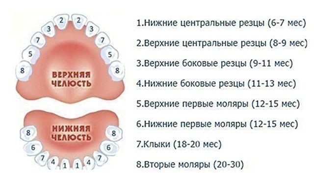 график прорезания зубов