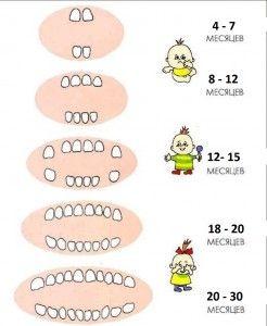 Ребенку 7-8 месяцев: нет зубов, что делать, если не растут зубы?