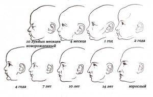 особенности строения черепа