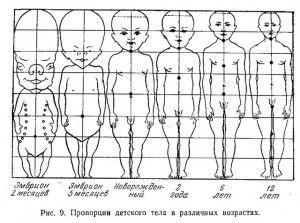 пропорции детского тела