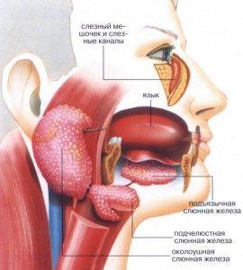 Воспаление слюнной желези: симптоми и лечение