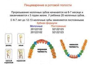 Сколько молочных зубов у детей должно быть