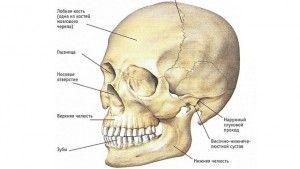 состав черепа
