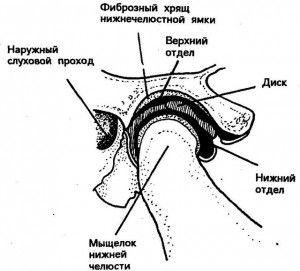 височно нижнечелюстной сустав
