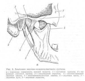 Строение сустава нижней челюсти