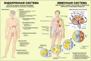 эндокриннная система