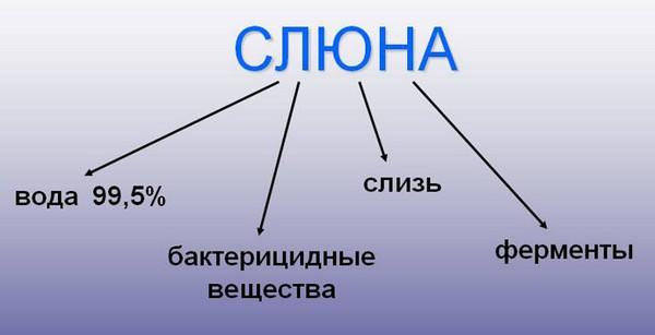 слюна
