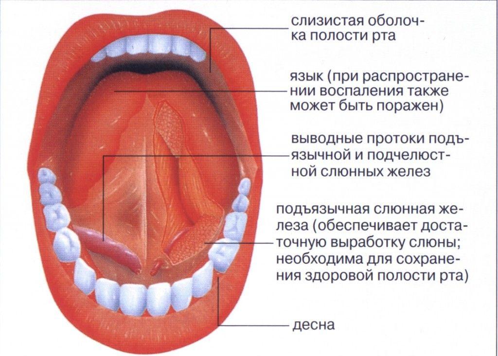Как лечить стоматит в домашних условиях на языке